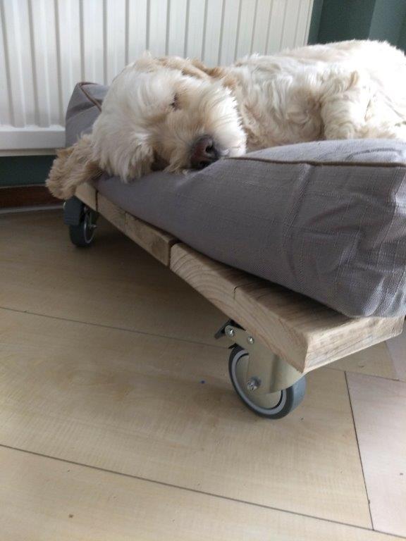 Sjaak op het houten hondenmand